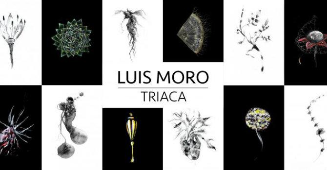 2342_luis-moro_triaca-768x366